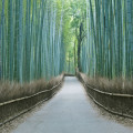 japan_bamboo03