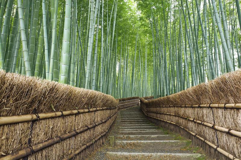 japan_bamboo07