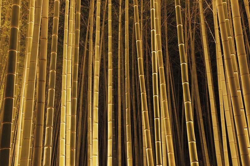 japan_bamboo09