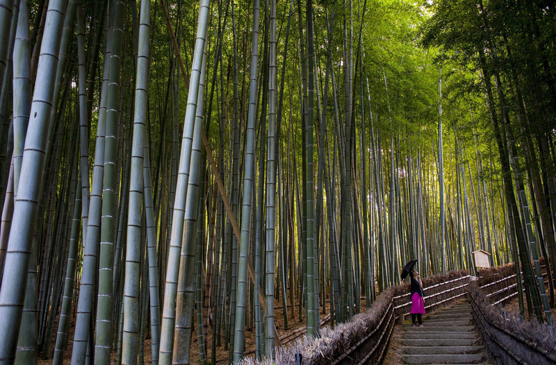 japan_bamboo12