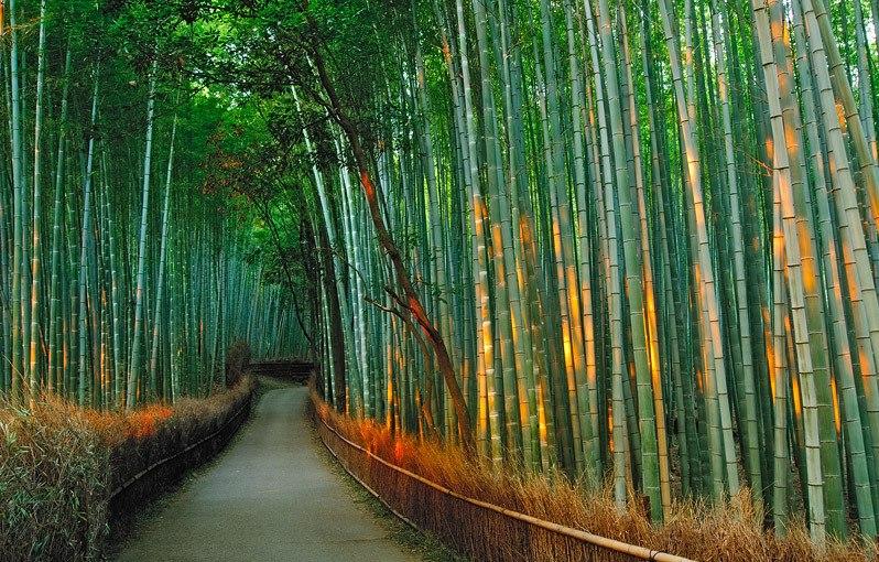 japan_bamboo14