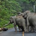 man-apologizes-elephants-khao-yai-national-park-thailand-4
