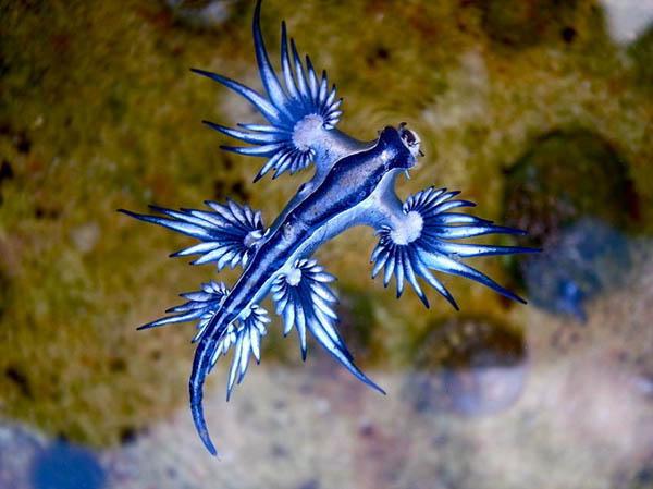 Удивительный голубой дракон.