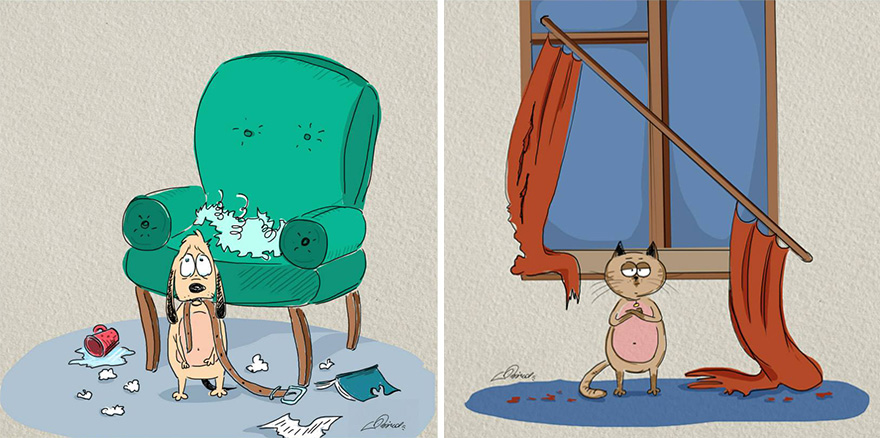 Разница между кошками и собаками