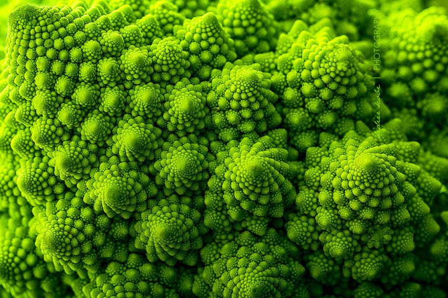 Фотографии геометрических растений для любителей симметрии02