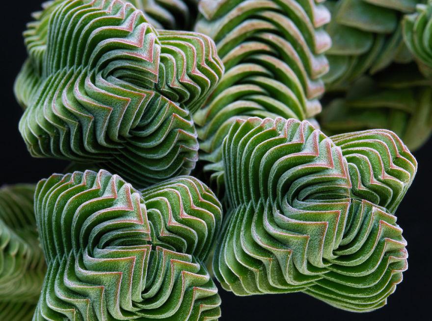 Фотографии геометрических растений для любителей симметрии03