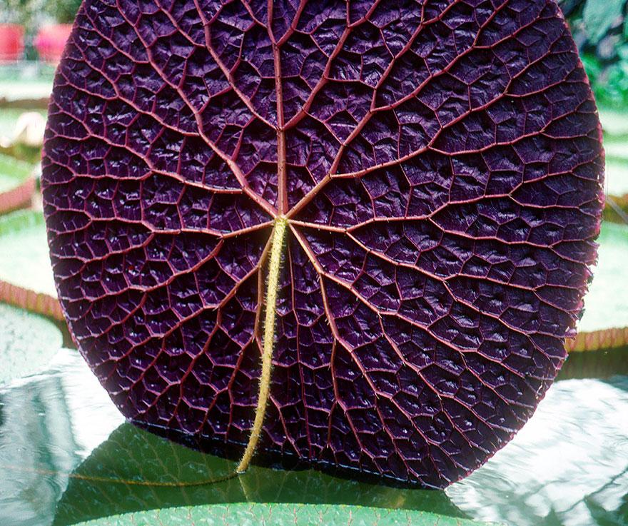 Фотографии геометрических растений для любителей симметрии04