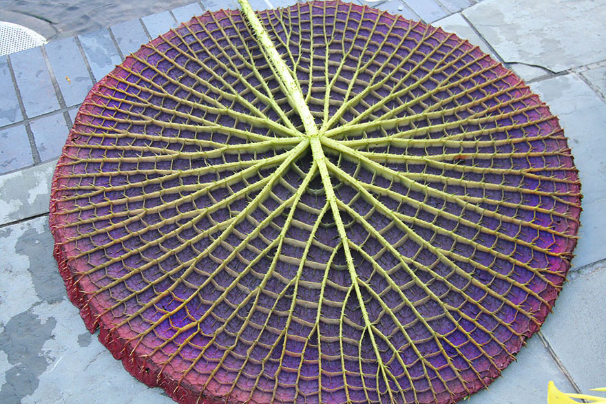 Фотографии геометрических растений для любителей симметрии05
