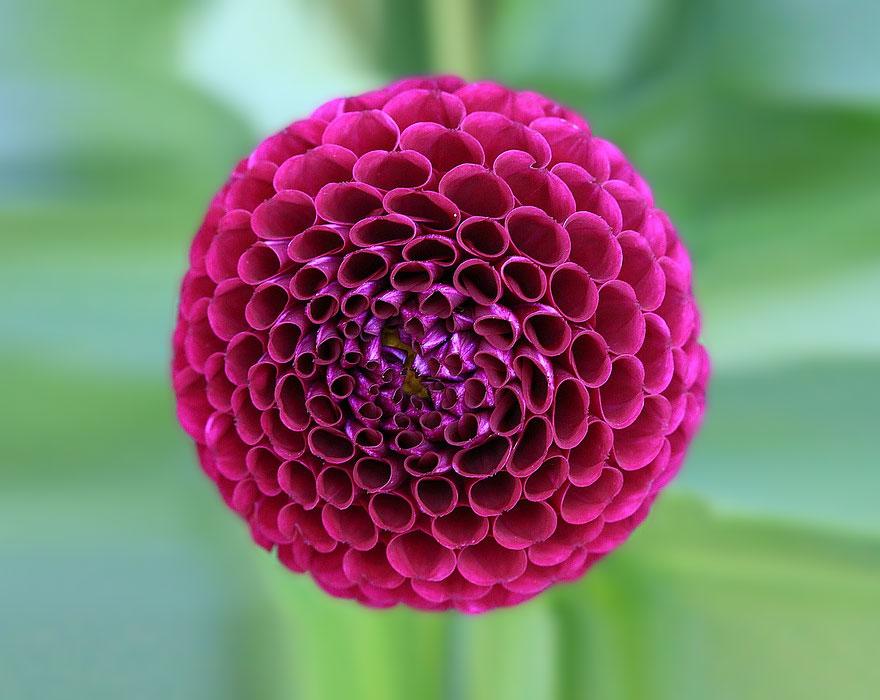 Фотографии геометрических растений для любителей симметрии06