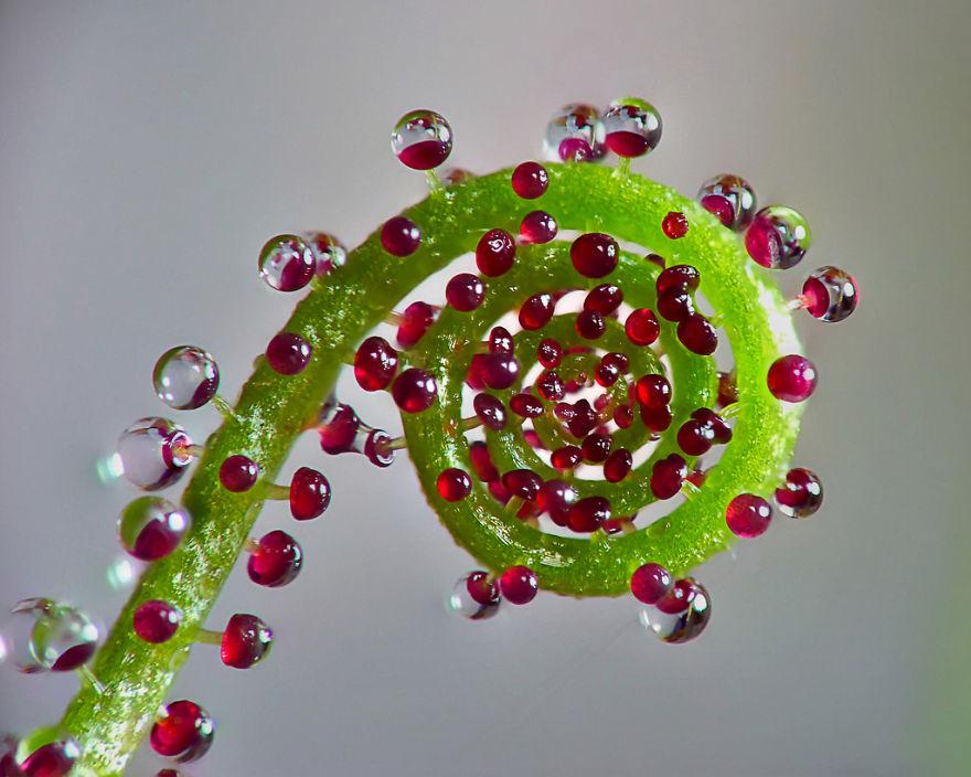 Фотографии геометрических растений для любителей симметрии08