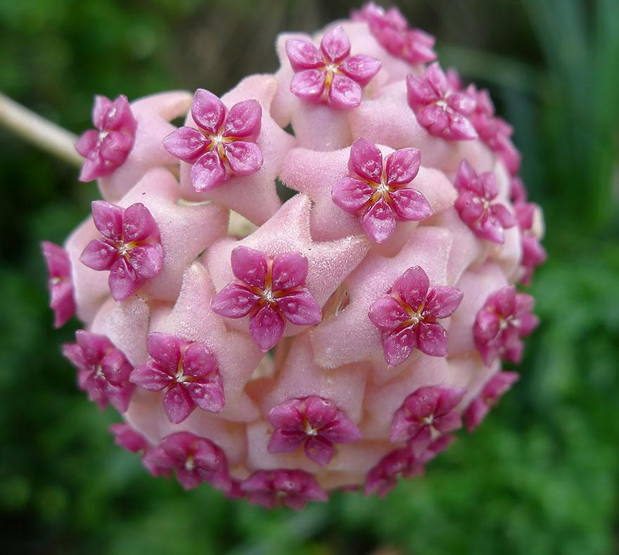 Фотографии геометрических растений для любителей симметрии09