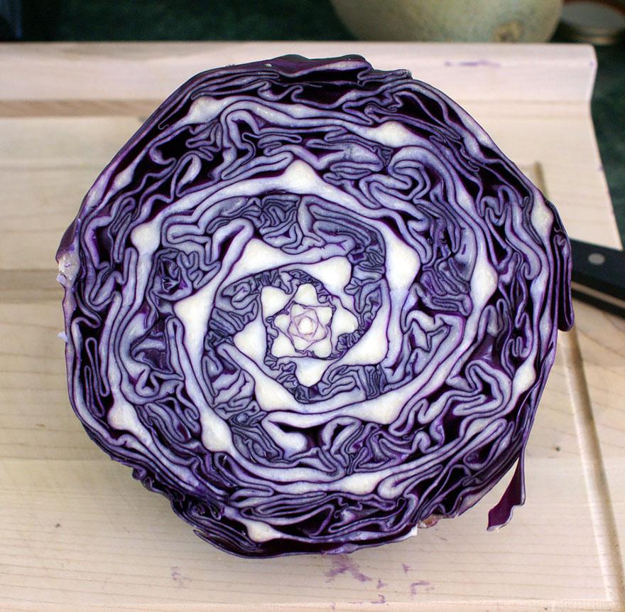 Фотографии геометрических растений для любителей симметрии10
