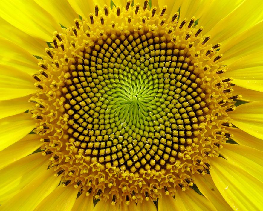 Фотографии геометрических растений для любителей симметрии11