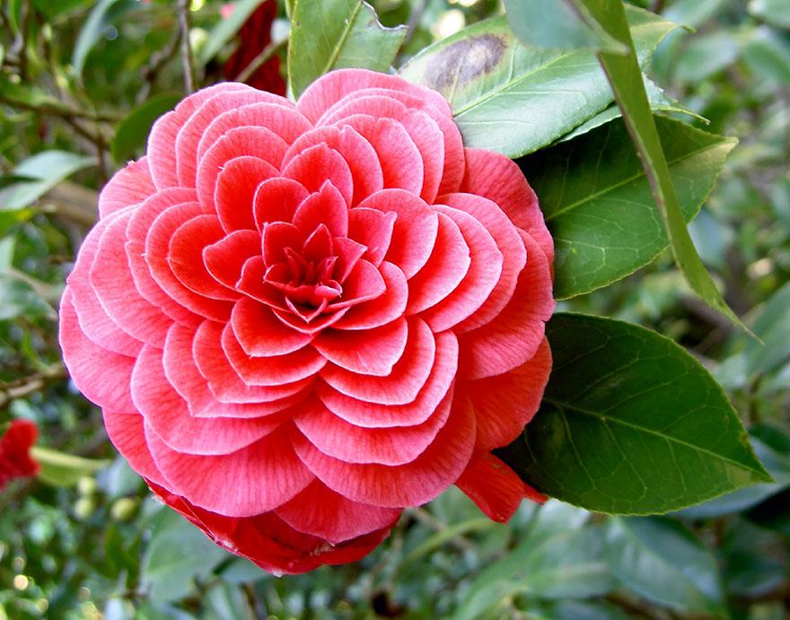 Фотографии геометрических растений для любителей симметрии12