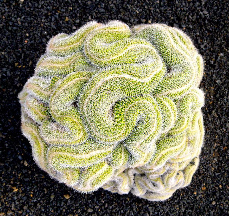 Фотографии геометрических растений для любителей симметрии14