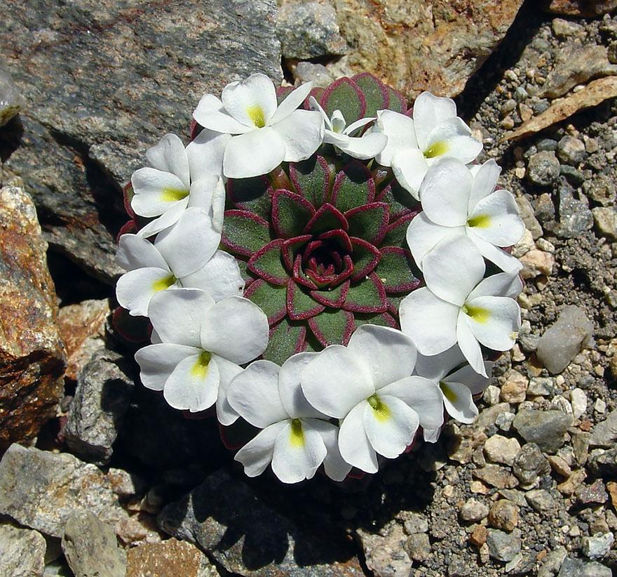 Фотографии геометрических растений для любителей симметрии15