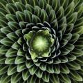 Фотографии геометрических растений для любителей симметрии16