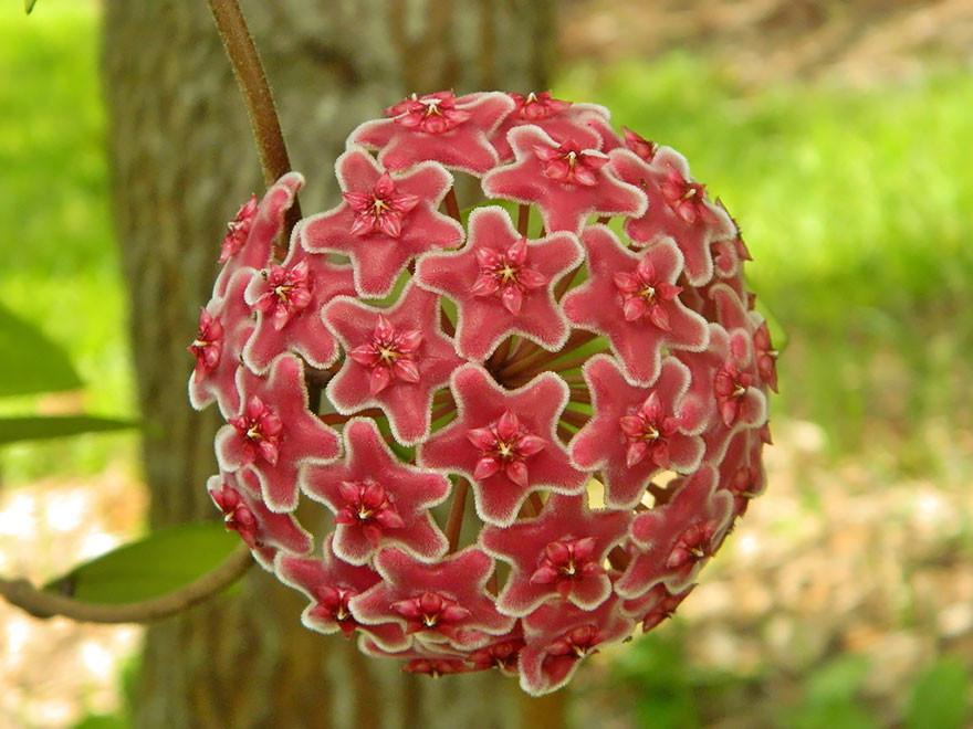 Фотографии геометрических растений для любителей симметрии19