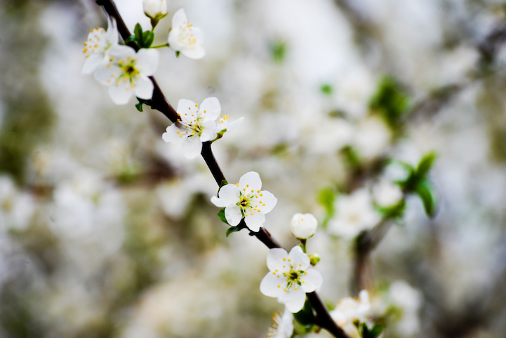 foods-flowers-13