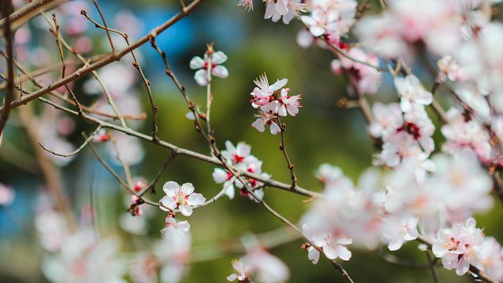 foods-flowers-19