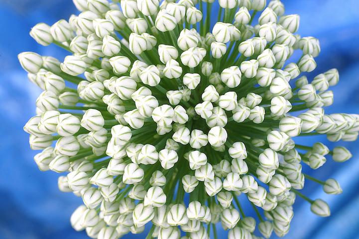 foods-flowers-3