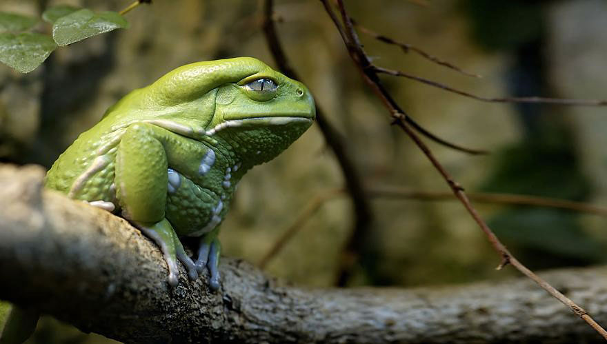 frogs-3