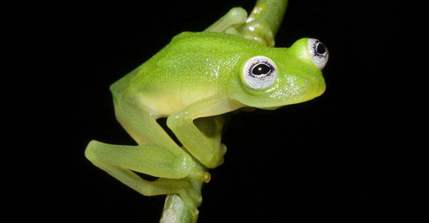 frogs-7