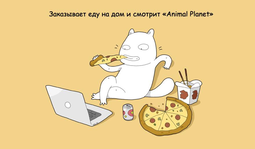 home-alone-cat-5
