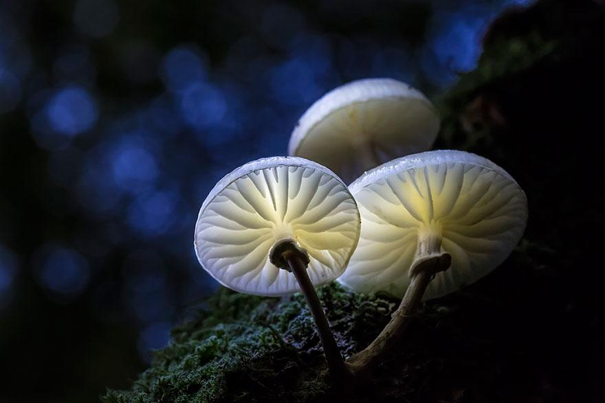 mushroom-10