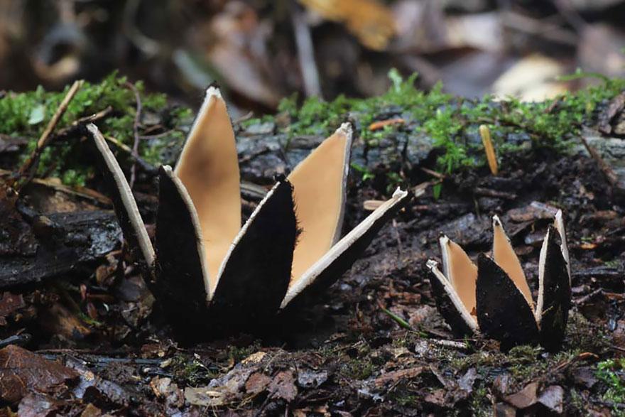 mushroom-24