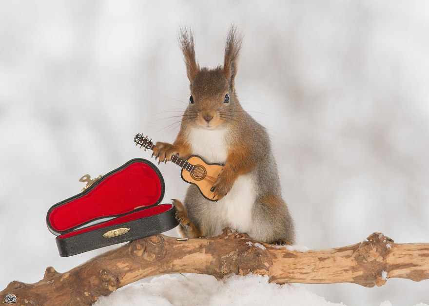 squirrels-with-tiny-music-instruments-1