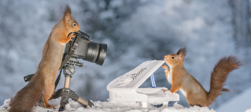 squirrels-with-tiny-music-instruments-10