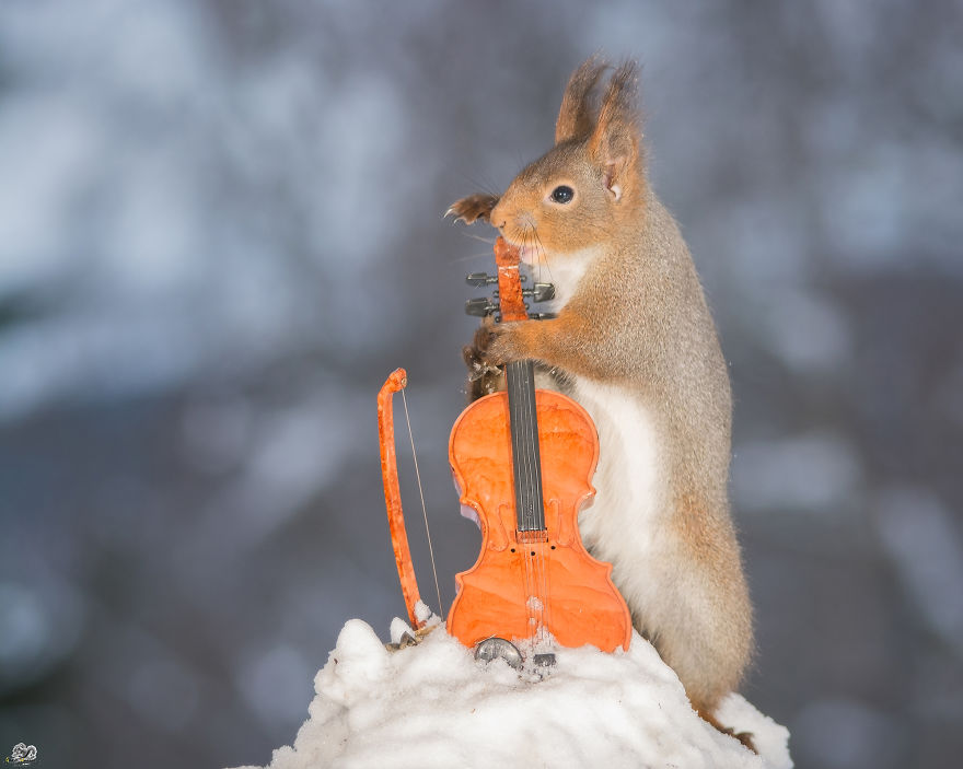 squirrels-with-tiny-music-instruments-11