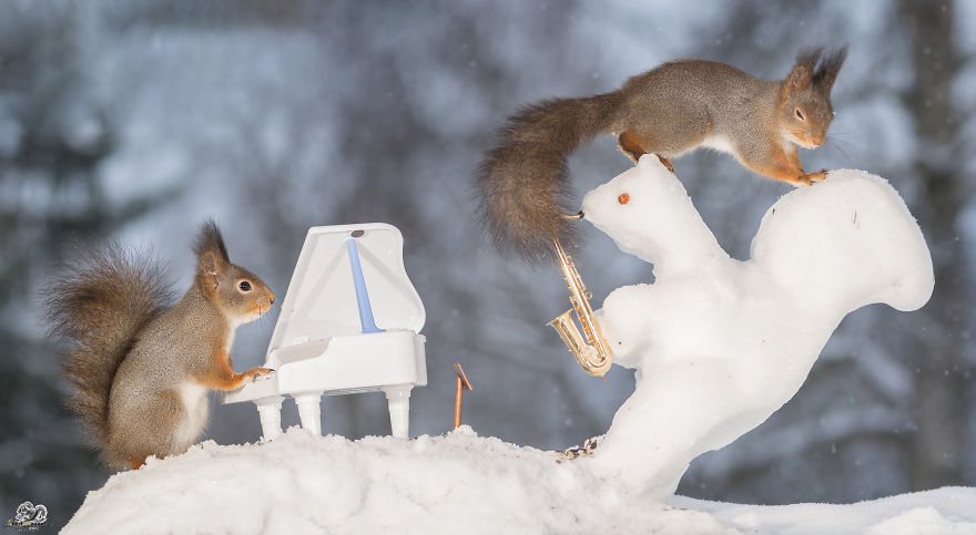 squirrels-with-tiny-music-instruments-12