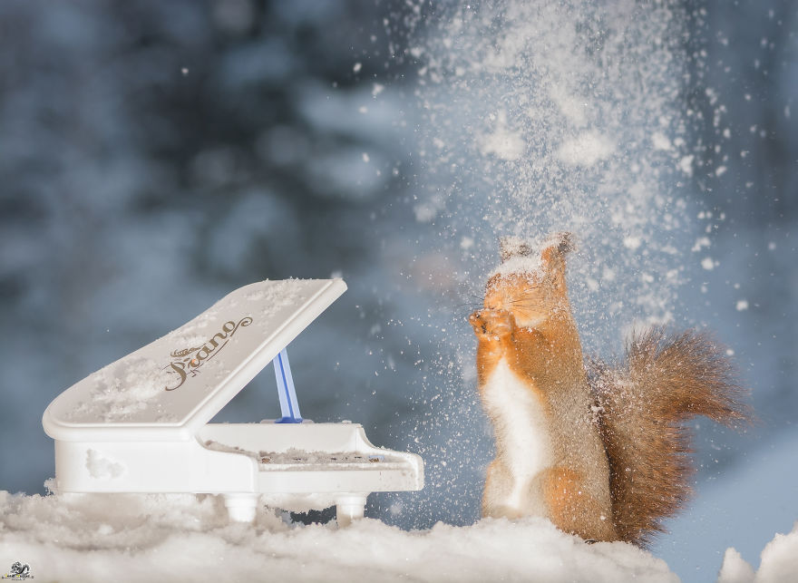 squirrels-with-tiny-music-instruments-13