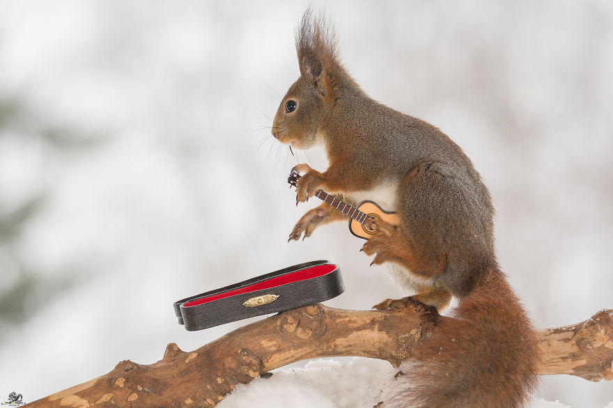 squirrels-with-tiny-music-instruments-15
