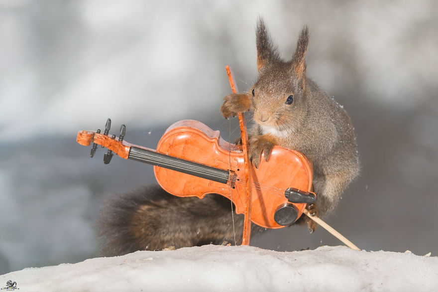 squirrels-with-tiny-music-instruments-2