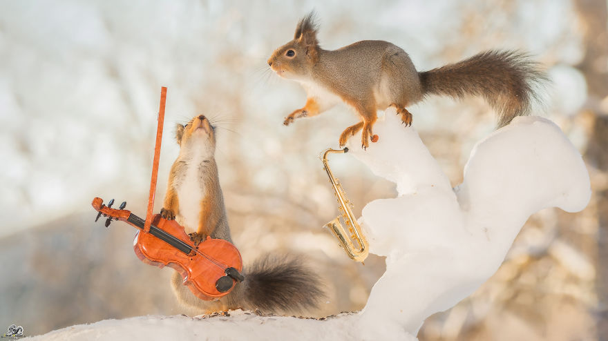 squirrels-with-tiny-music-instruments-4