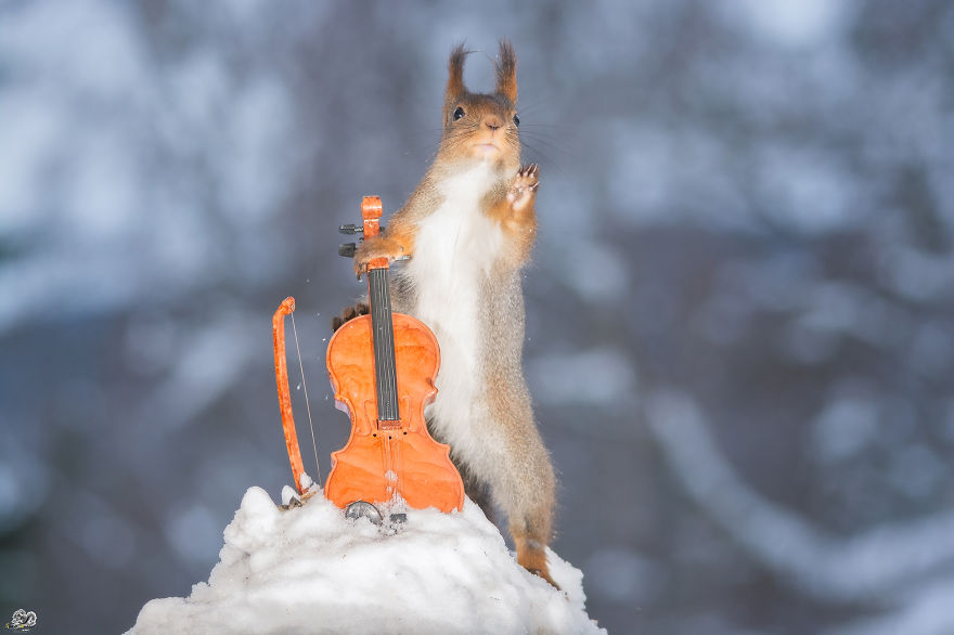 squirrels-with-tiny-music-instruments-5