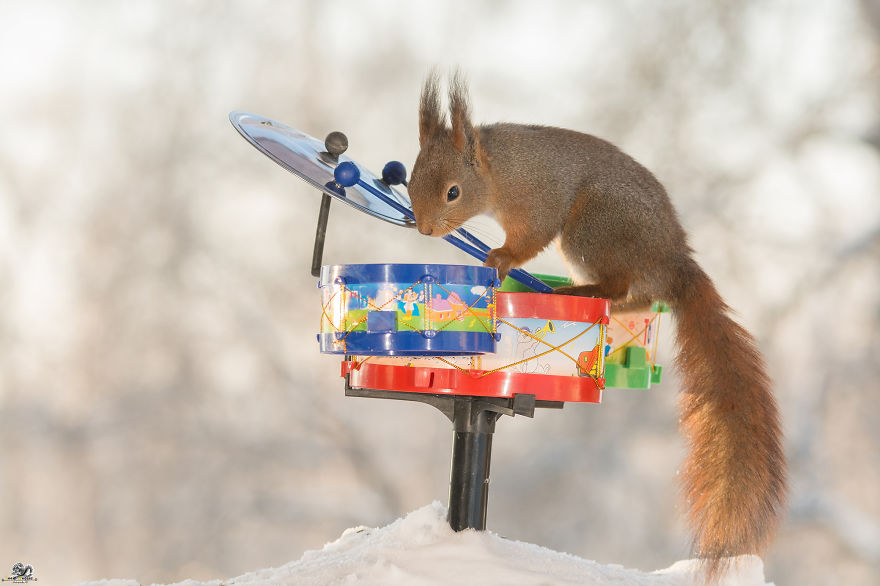 squirrels-with-tiny-music-instruments-6