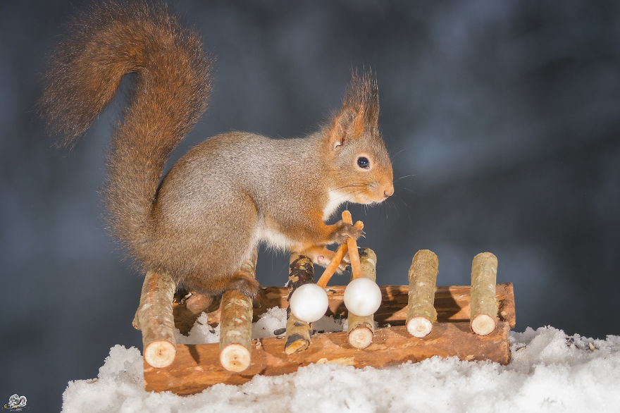 squirrels-with-tiny-music-instruments-7