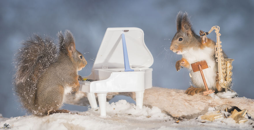 squirrels-with-tiny-music-instruments-8