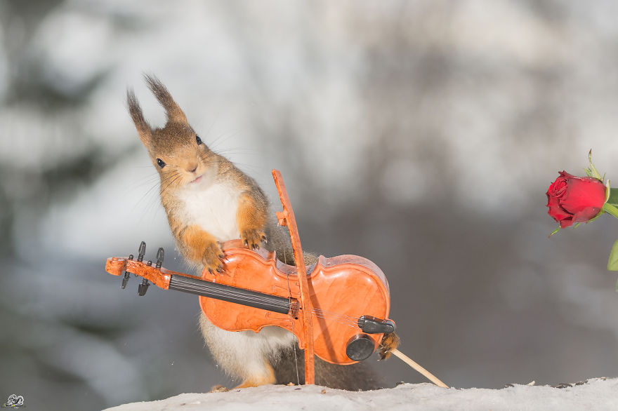 squirrels-with-tiny-music-instruments-9