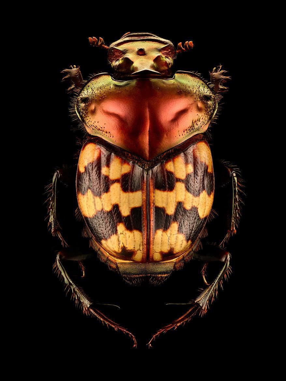 Безупречная красота мира насекомых в работах Левона Бисса.