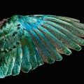robert-clarke-birds-0