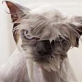 funny-pets-мини