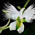 Flowers-мини