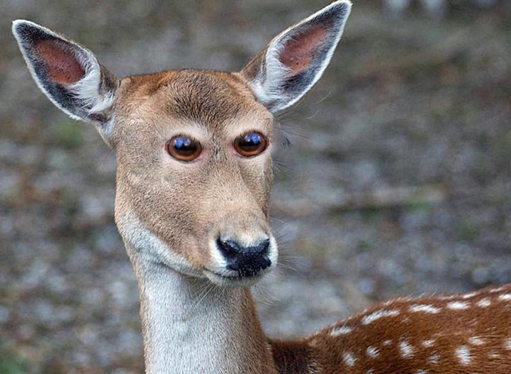 Если бы у животных глаза были спереди