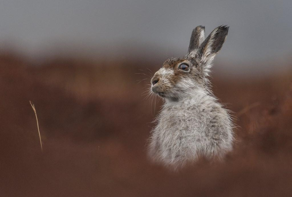 British Wildlife Photography Awards 2016