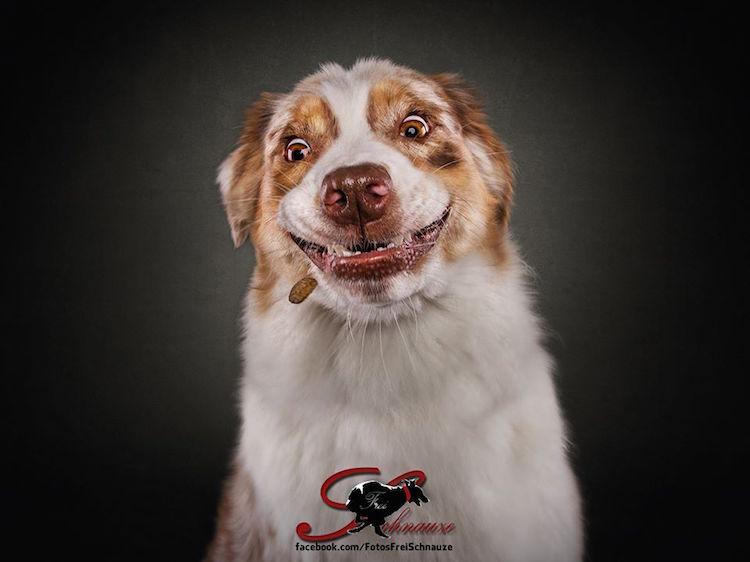 Эмоции собак в проекте Кристиана Вилера